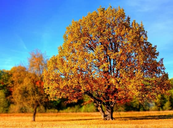 Sreda Prognoza Vreme u Oktobru