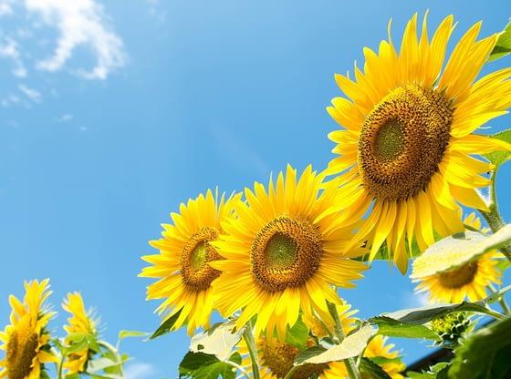 Danas sunčano i tropski toplo